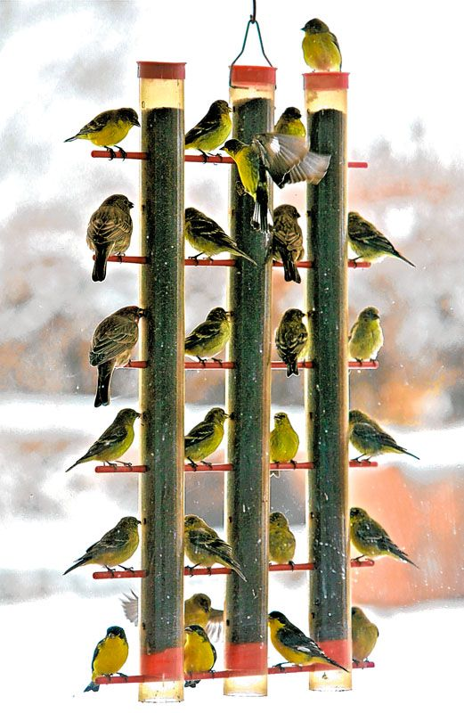 A great feeder for your Finch. Available in our wild bird section.
