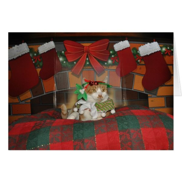 Orange and white tabby cat Christmas card #cards #christmascard #holiday