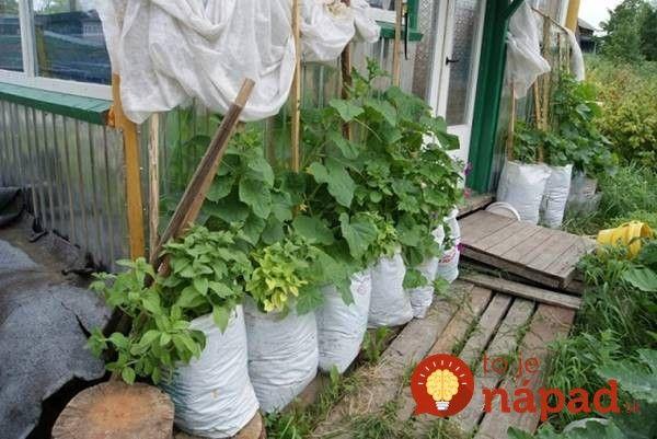 Dnes vám predstavíme spôsob, ako si vypestujete vlastné uhorky dokonca aj ak nemáte záhradu.