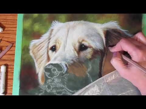 Painting A Golden Retriever With Pastels On Suede Mat Board Pros