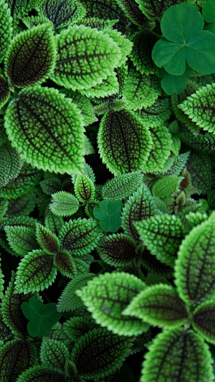 Green Leaves Plants Garden 720x1280 Wallpaper Nature Natural