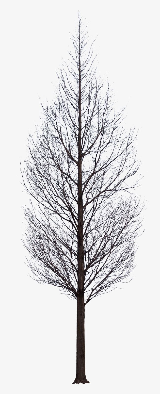 Dark Tree Tree Clipart Leaves Black Png Transparent Clipart Image And Psd File For Free Download Tree Photoshop Photoshop Landscape Dark Tree