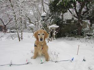 Poppy in the snow!