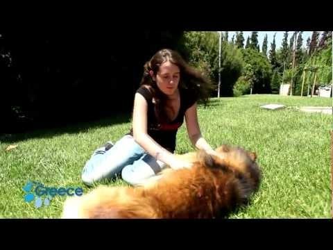Visit Greece| Real experience by Sofia (German) - Ein Erlebnis erzählt von Sofia #truegreece