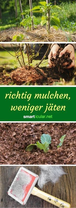 Mulchen statt jäten: Mehr Ertrag, weniger Beikraut dank Pflanzenresten