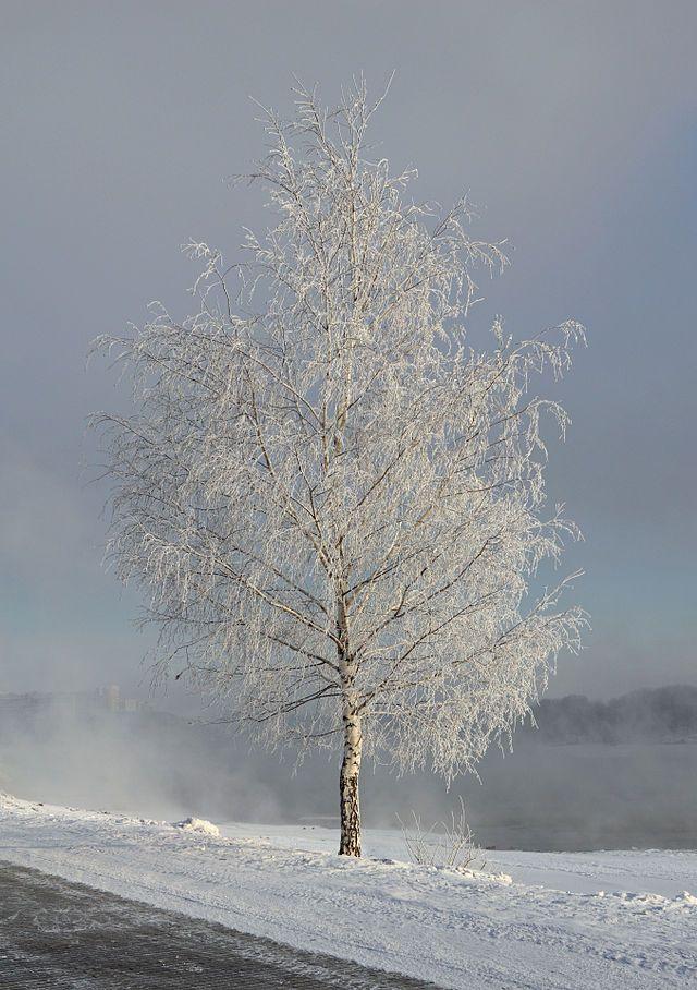 Kolomenskoe in white - Dec12 - 03 snow - Изморозь — Википедия