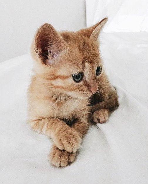 Cats are so cute, gatos são tão fofos.