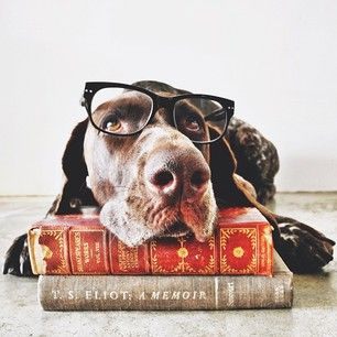Bibliophiles as well? These dogs are almost too much.   28 Pictures Of Your New Favorite Instagram Duo
