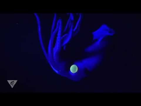 Fluorescence in the deep-sea squid Histioteuthis - YouTube