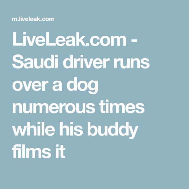LiveLeak.com - Saudi driver runs over a dog numerous times while his buddy films it