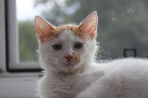 Melman - poleca się do adopcji. Wiek 4 miesiące,Kontakt: Aneta: 787 410 947,                    a-a.motyl@wp.pl