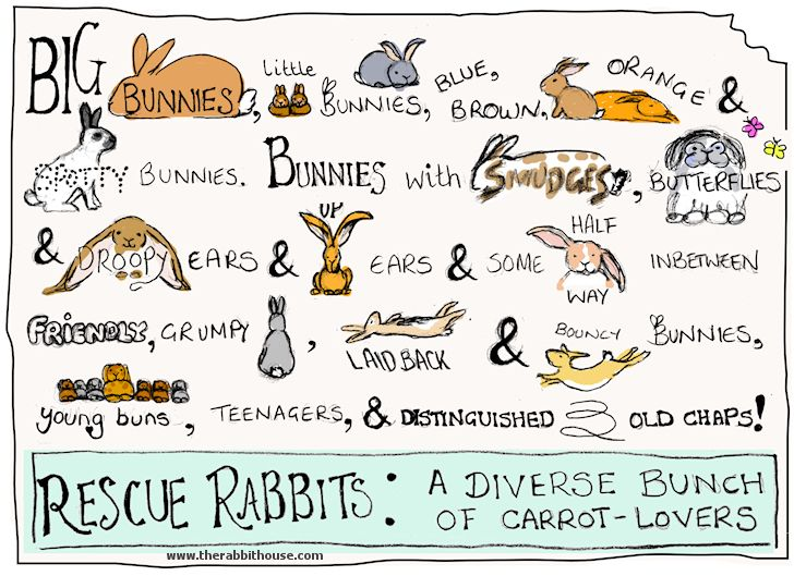 I love this poem - it is from the rabbit house which is an amazing bunny website full of all things rabbit!
