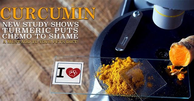 Curcumin may be THE most important herb to give your dog to decrease and maybe elliminate their chances of cancer.