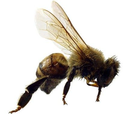 Research using bees confirms that you are what you eat.