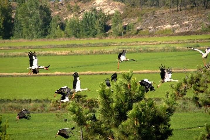Birdswacthing Nature , Comporta Portugal