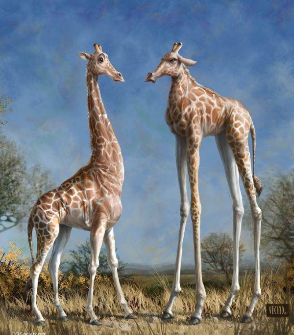Derp Giraffes @Vi Thai