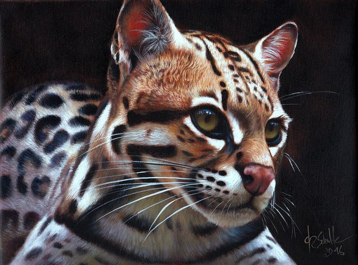 1000+ Images About Big Cat Art On Pinterest