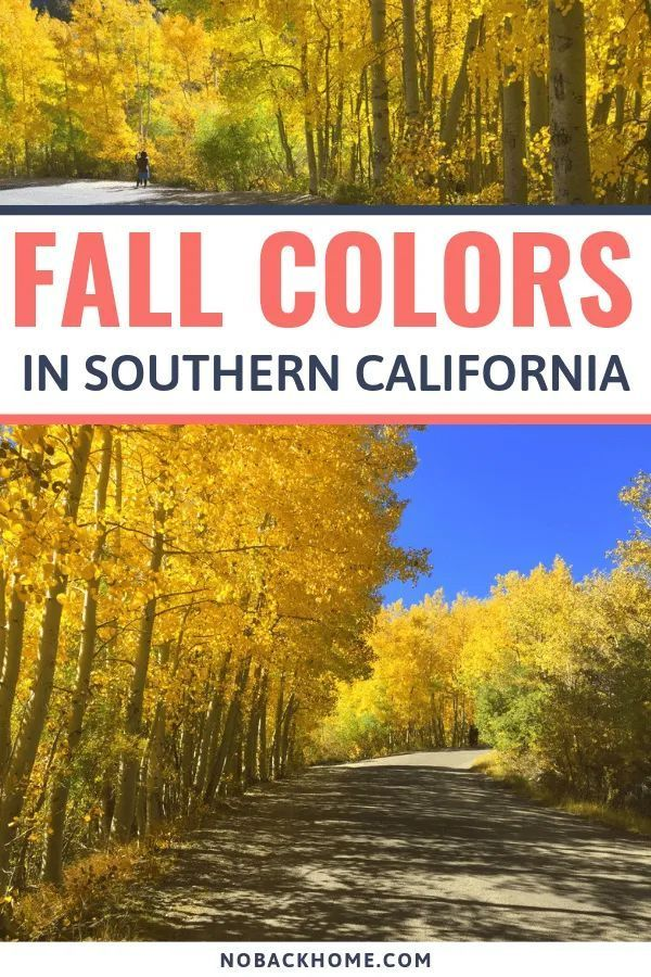 Finding Fall Colors In Bishop California California Travel Los Angeles Travel Bishop California