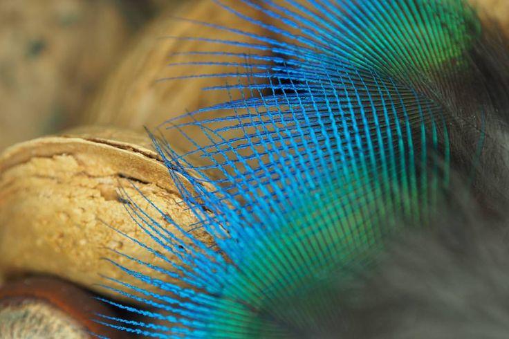 #almonds, #peacockfeather, #autumn🍁