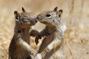 Squirrel: Diet, Habits Plus 20 Fun Facts You Never Know - PestWiki