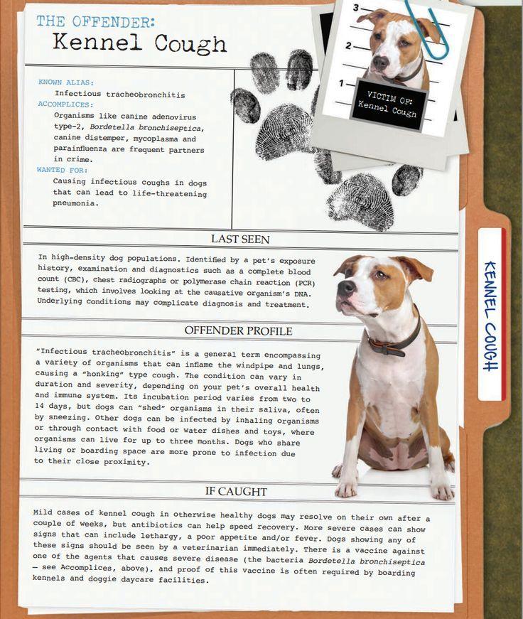 Kennel Cough Risks Precious Pets Pinterest