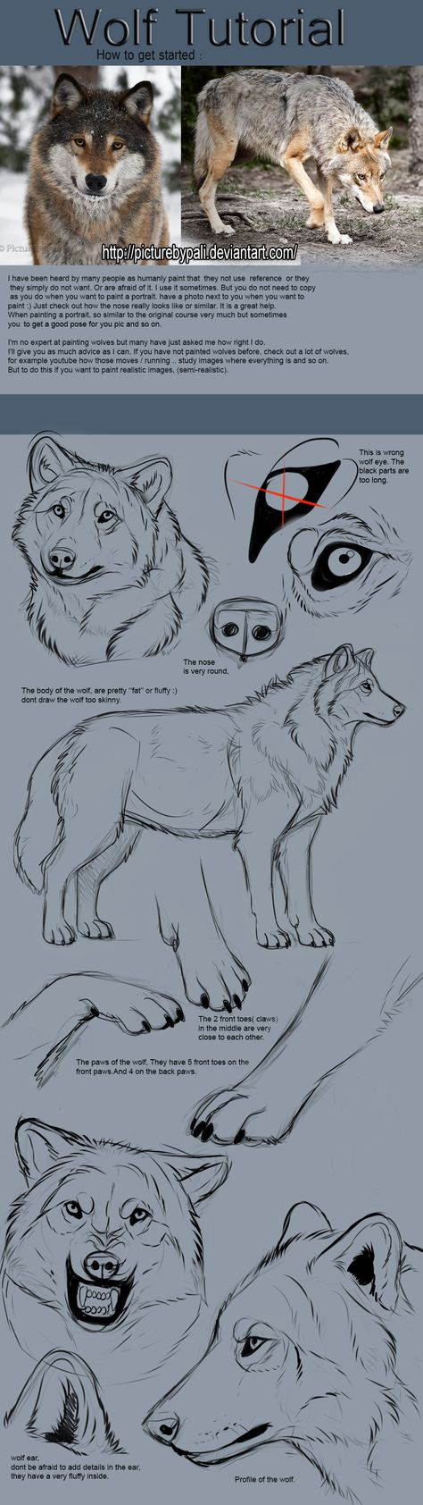 Wolf Tutorial by TheMysticWolf on @DeviantArt