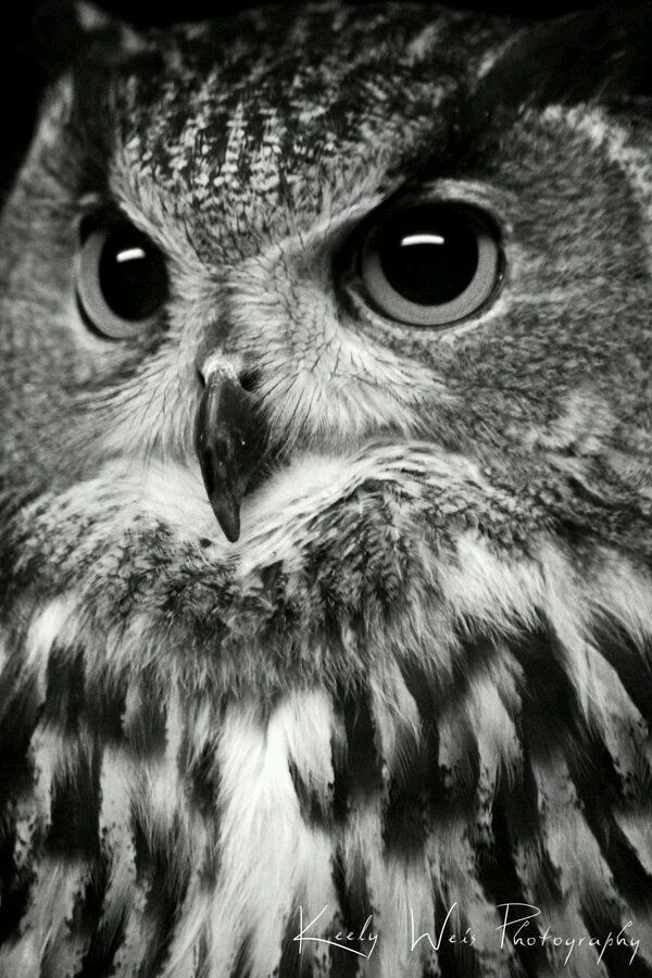 Le owl photo quote by keely weis