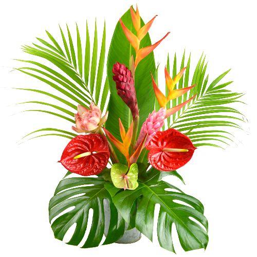 Cocktail est un joli bouquet exotique tout en hauteur, composé de :      3 héliconias     2 alpinias     1 rose de porcelaine (selon disponibilité)     3 anthuriums hybrides dont les fleurs sont fraîchement importées de notre plantation à la Martinique. Fleurs Lointaines.