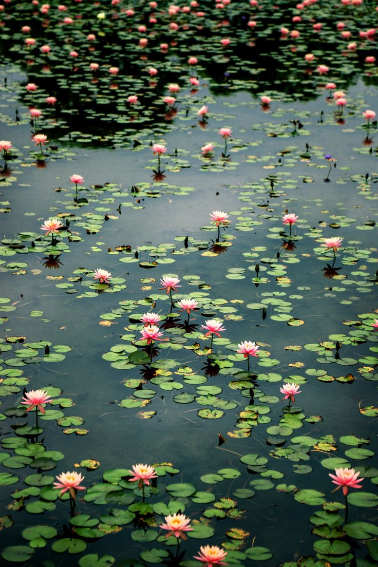Water Lilies IV by JamesHungYC on 500px                                                                                                                                                                                 More