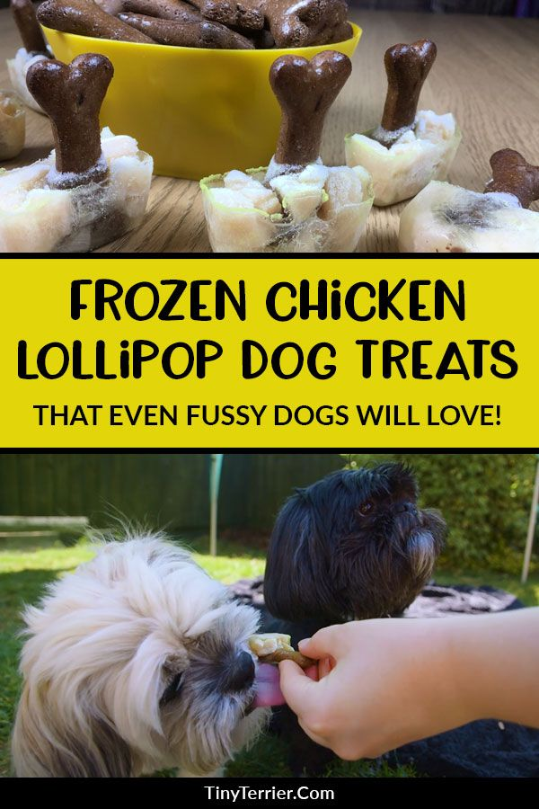 frozen chicken lollipops for dogs tiny terrier recipe homemade dog cookies chicken for dogs chicken lollipops frozen chicken lollipops for dogs