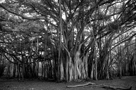 Home Decor Majestic Banyan Tree Metal Print Large by LOphoto808