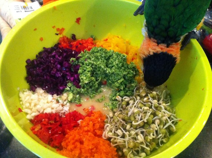 Bird food recipes and cooking tips