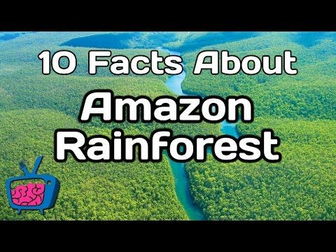 10 Mind Blowing Facts About The Amazon Rainforest - YouTube