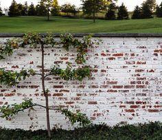 Mortar washed brick or German smear on bricks at front of house & new walls More
