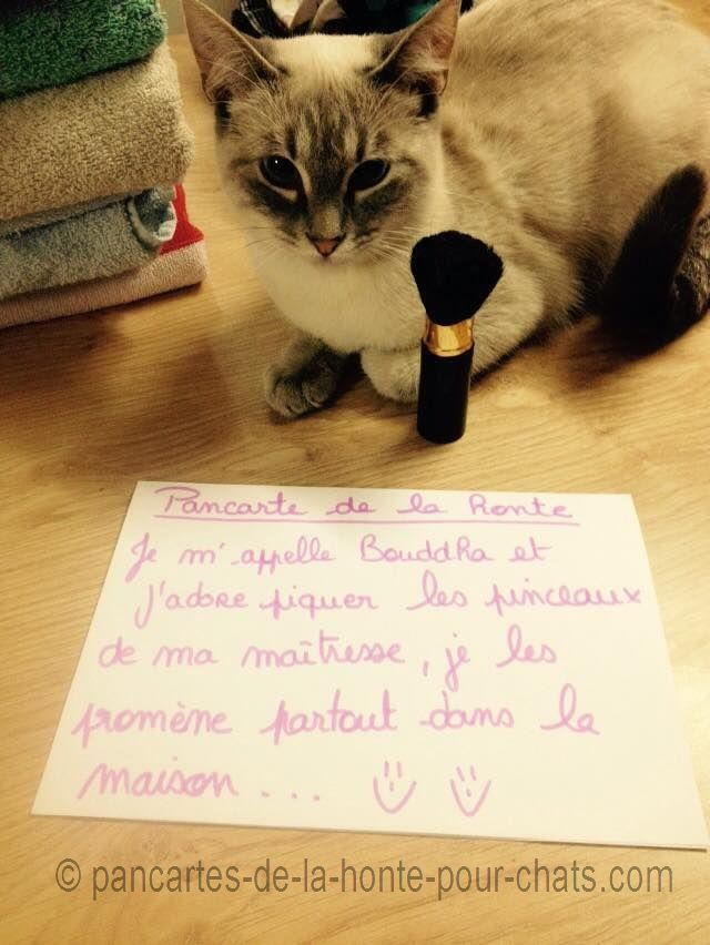 « Shame Photo. I'm Bouddha and I love to steal makeup paintbrush of my mistress, I walk those everywhere in the house… :) :) » #lolcats #shameyourpet #shameyourcat #cat #cats #chats