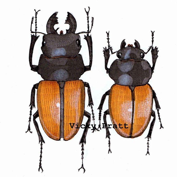 By Vicky Pratt. Copic markers Beetle pair. Entomology. For Inktober 2015. www.vicpratt.wix.com/vickypratt Find me on FB and IG Vicky Pratt - Illustrator.