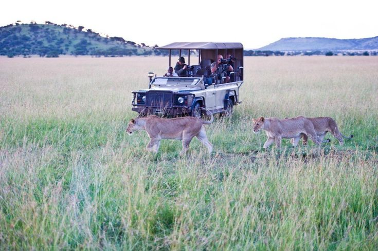 Daily game drives with professional guides provide the perfect opportunity to get up close to Africa's incredible animals, while evening drives reveal the elusive magic of nocturnal Africa.