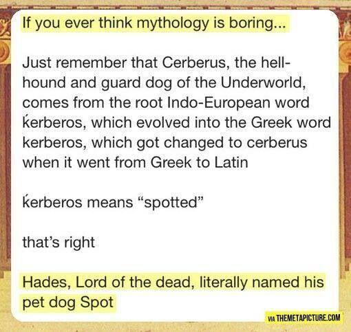Really Hades? Out of all the names you could've named your hell hound, you picked Spot? Btw sorry guys I haven't posted PJO or HoO on a while so here's some fun tumblr for you.