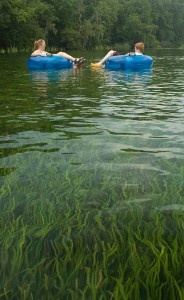 Rainbow River close to Ocala Fl. A scenic 2 mile tubing experience in a constant 72 degree natural water setting.