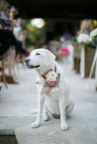 Ways to Include Pets in Your Wedding | Brides.com