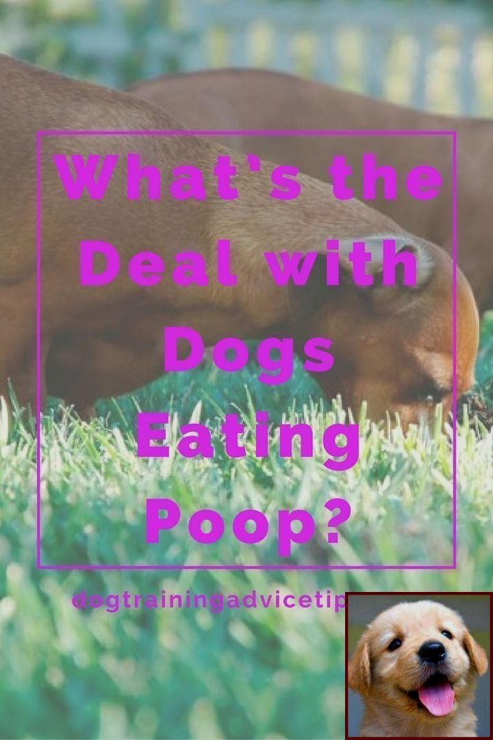 1 Have Dog Behavior Problems Learn About Dog Behavior Youtube And