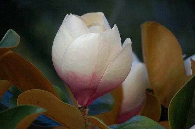 Botón de magnolio artificial