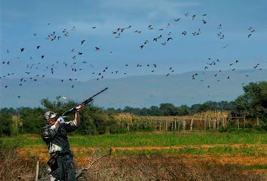 The Basics of Dove Hunting
