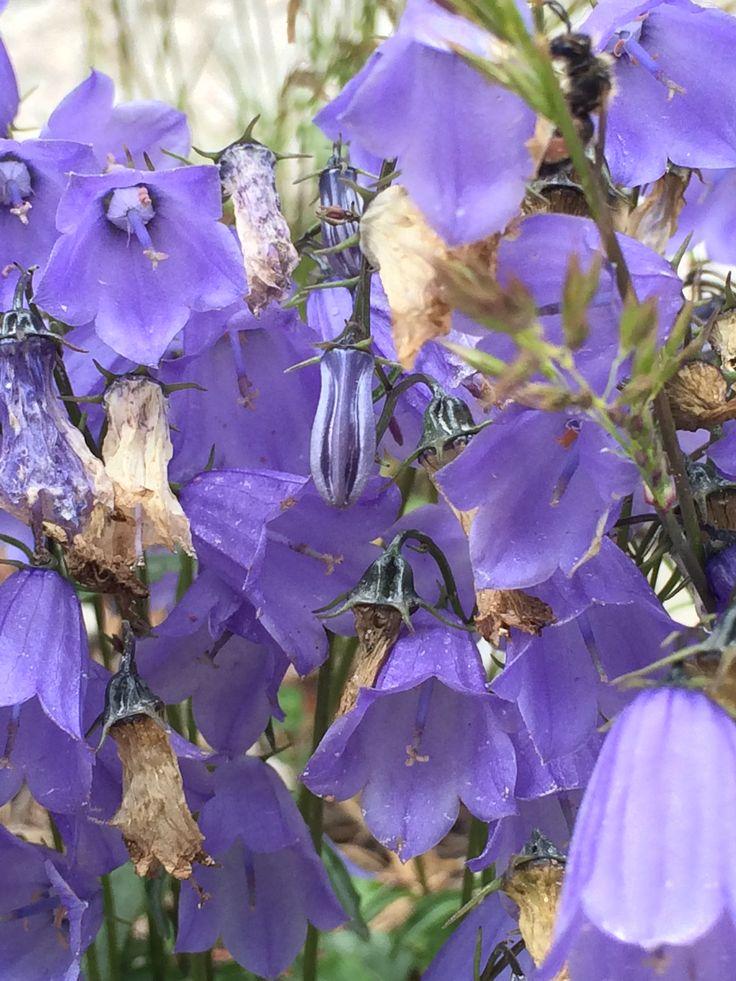 fiori di montagna 4