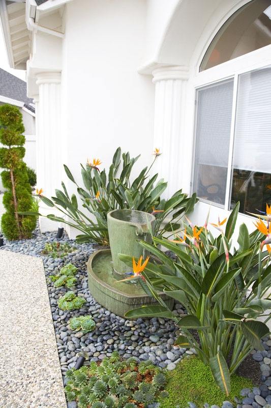 138 best ideas for the yard images on Pinterest | Gardening ... Tropical Houseplants Garden Design Front on tropical sun room decorating ideas, tropical cats, tropical ornamental grasses, tropical dracaena, tropical succulents, tropical flowers, tropical hostas, tropical plants,