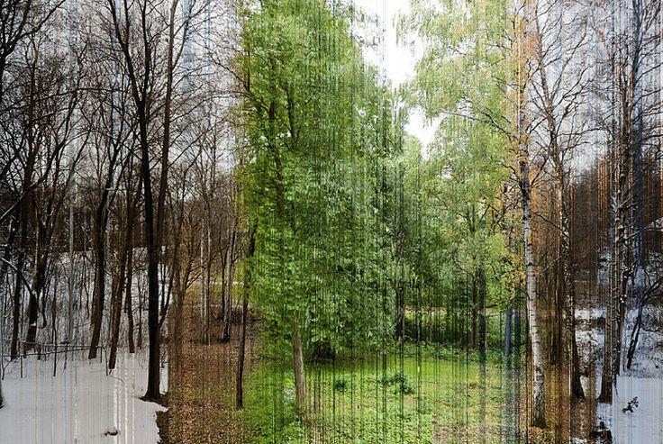 Zrób zdjęcie mijającego czasu - cztery pory roku na jednej fotografii