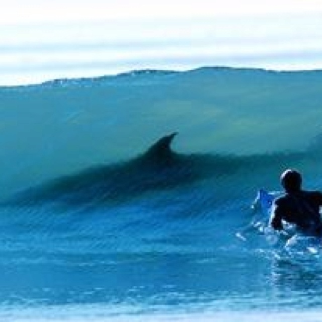 Shark in wave - terrifying! | Wild Waves | Pinterest