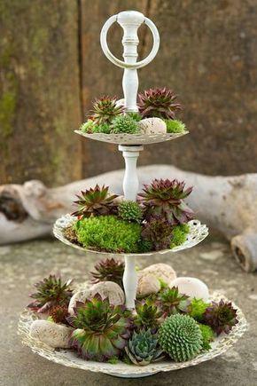 Deko Sukkulenten Mehr Tiered Trays Succulents Garden