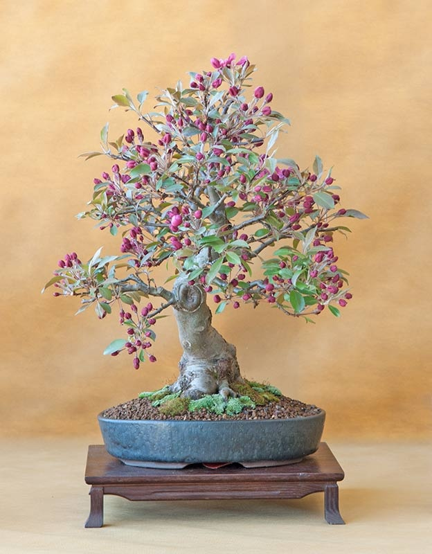 395 best bonsai at it 39 s best images on pinterest bonsai for How to make an olive tree into a bonsai