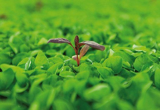 Micro herbs from Koppert Cress - New Covent Garden Market